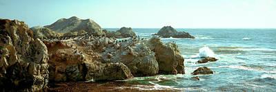 Rock Formations At A Coast, Bird Rock Poster