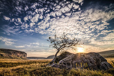 Poster featuring the photograph Rock Tree And Rising Sun by Mike Gaudaur