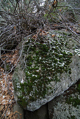 Rock With Lichen And Snow Poster