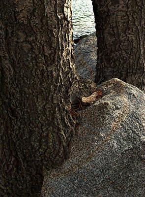 Rockin Tree Poster