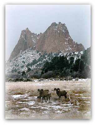 Rocky Mountain Big Horn Sheep Poster by Michelle Frizzell-Thompson