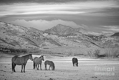 Rocky Mountain Country Morning Bw Poster