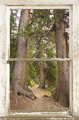 Rocky Mountain Forest Window View Poster by James BO  Insogna