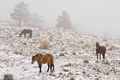 Rocky Mountain Horses Snow And Fog Poster