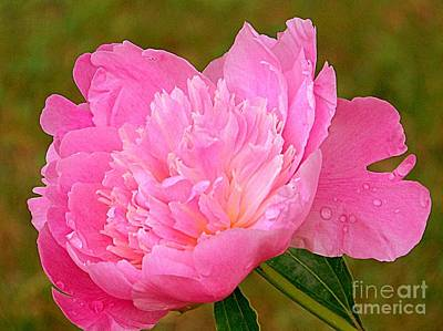 Pink Peony Poster by Eunice Miller