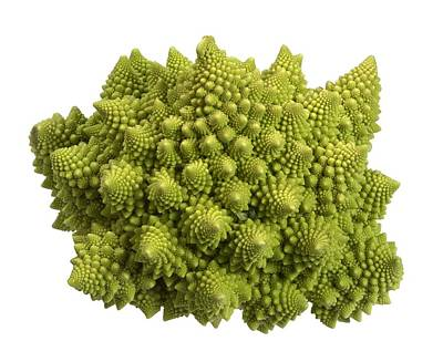 Romanesco Cauliflower (brassica Poster by Science Photo Library