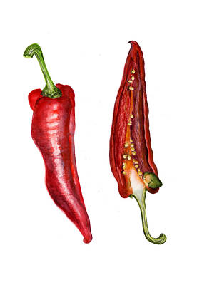 Romano Red Pepper Poster by Alison Langridge