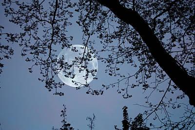 Poster featuring the photograph Romantic Moon  by Angel Jesus De la Fuente