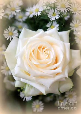 Romantic White Rose Poster by Carol Groenen