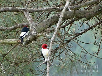 Romantic Woodpeckers Poster