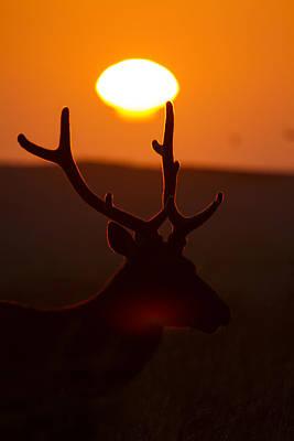 Roosevelt Bull Sunset Silhouette Poster by Phil Johnston