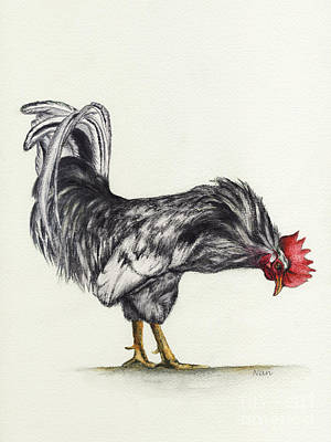 Rooster Poster by Nan Wright