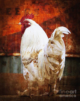Rooster With An Attitude Poster