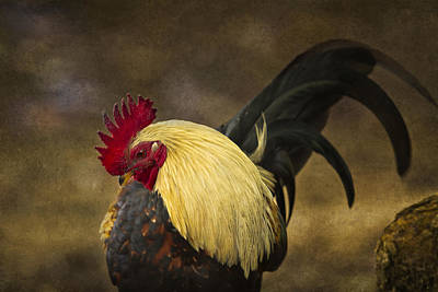 Rooster With Blond Mane - Kauai - Hawaii Poster