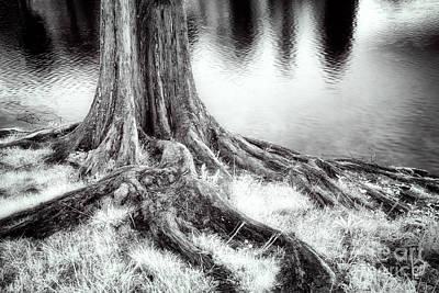 Roots Run Deep - Greensboro Nc Poster by Dan Carmichael