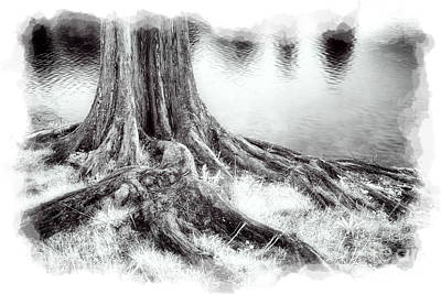 Roots Run Deep - Greensboro Nc II Poster