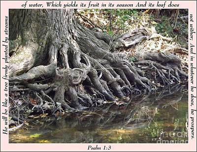 Roots With Verse Psalm 1 3 Poster by Sara  Raber
