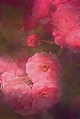 Rose 217 Poster