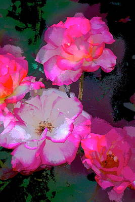 Rose 223 Poster
