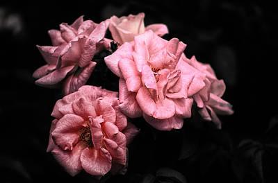 Rose 4 Poster