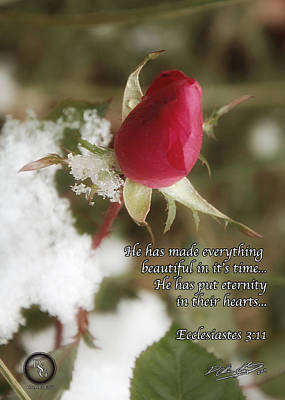 Rose Bud In Snow Poster