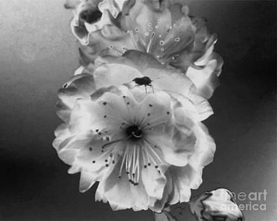 Rose Bug Poster by Tlynn Brentnall