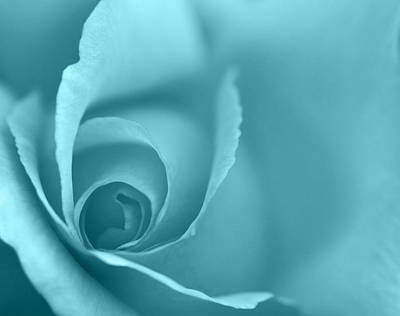 Rose Close Up - Turquoise Poster