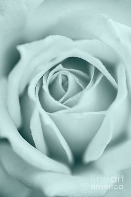 Rose Closeup In Monochrome Poster by Vishwanath Bhat