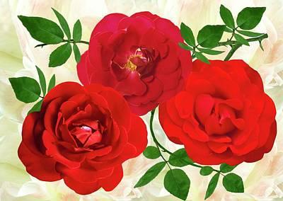 Rose 'dublin Bay' (rosa 'dublin Bay') Poster
