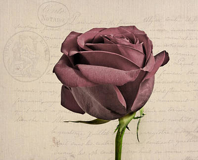 Rose En Variation - S02c3t3a Poster by Variance Collections