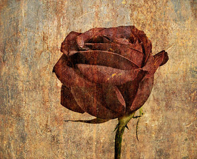 Rose En Variation - S22ct05 Poster by Variance Collections