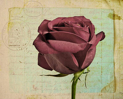 Rose En Variation - S23ct06 Poster by Variance Collections