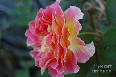 Rose Garden Poster by Garnett  Jaeger