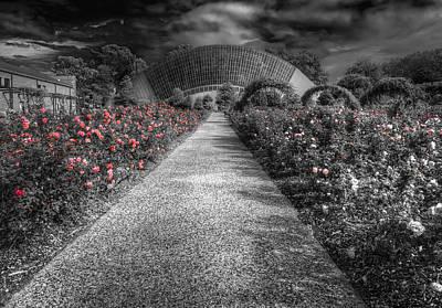 Rose Garden Poster by Wayne Sherriff