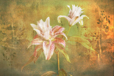 Poster featuring the photograph Rose Lily Silk by Bob Coates