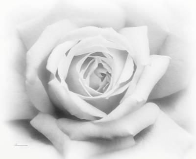 Rose Of Innocence Poster by Georgiana Romanovna