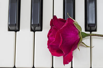 Rose Over Piano Keys Poster