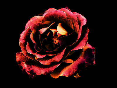 Rose Red Poster by Persephone Artworks