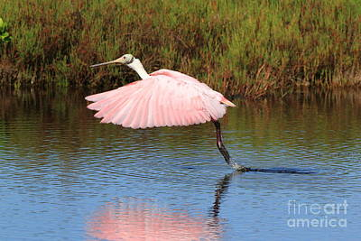 Poster featuring the photograph Roseate Spoonbill  by Jennifer Zelik