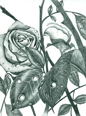 Roses And Thorns Poster by Dorian Day
