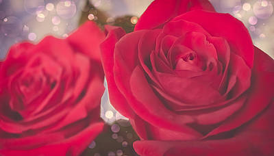 Roses For Me  Poster by Maibel  Ziello