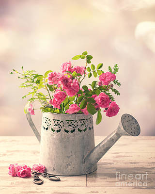 Roses In Watering Can Poster by Amanda Elwell