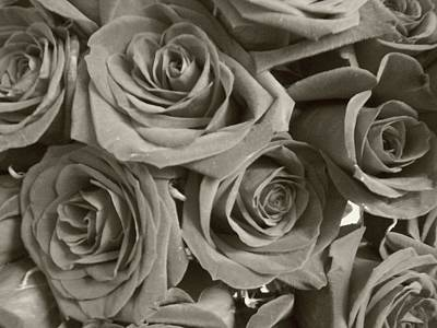 Poster featuring the photograph Roses On Your Wall Sepia by Joseph Baril