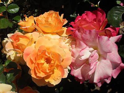 Roses Roses Roses Poster