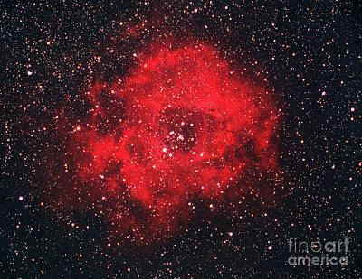 Rosette Nebula Poster by Chris Cook