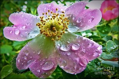 Rosey Raindrops Poster