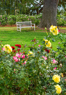 Rosy View - Beautiful Rose Garden Of The Huntington Library. Poster
