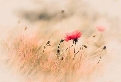 Red Poppy In The Field Poster by Annette Hanl