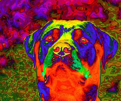 Rottweiler Portrait Pop Art Poster