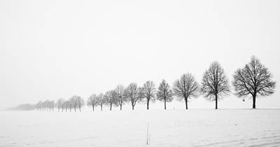 Row Of Bare Trees In Minimal Winter Landscape Poster